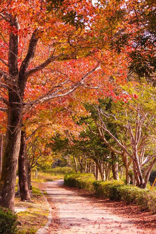 Mùa thu trải dài khắp các con đường