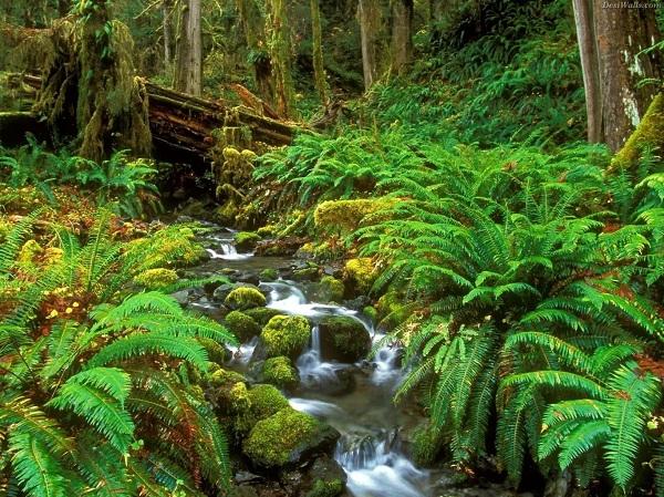 khu bảo tồn sinh thái Gành Dầu