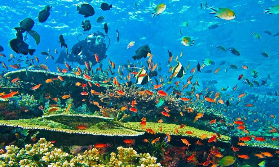 Lặn biển trên đảo Bunaken