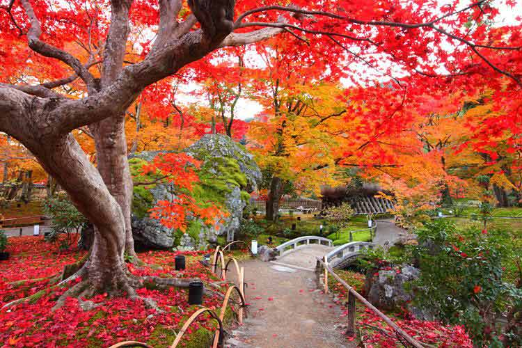 Lễ hội Lá đỏ mùa thu, Nhật Bản
