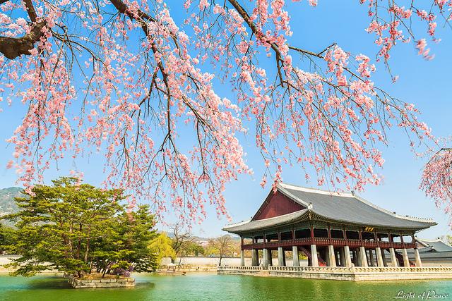 Vé máy bay khuyến mãi du lịch Hàn Quốc vào mùa Xuân