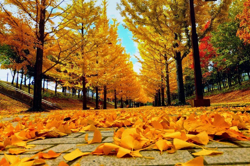 Khu vườn Luxembourg vào mùa thu