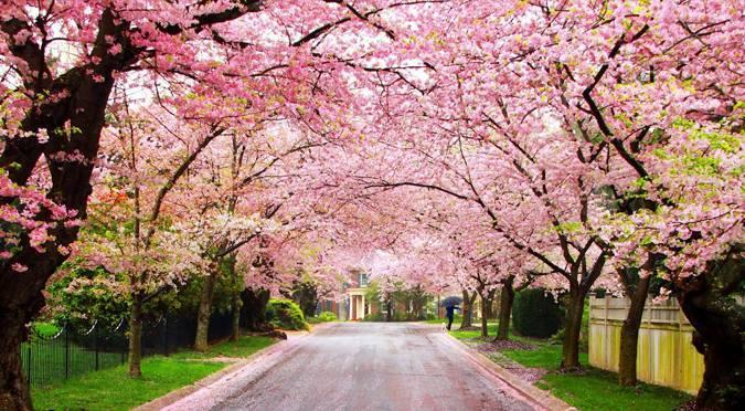 Công viên Hirosaki-koen (Aomori)
