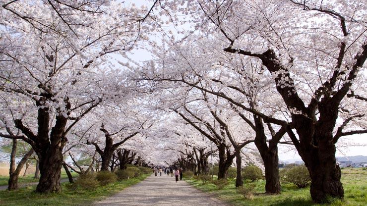 Công viên Matsumae-koen