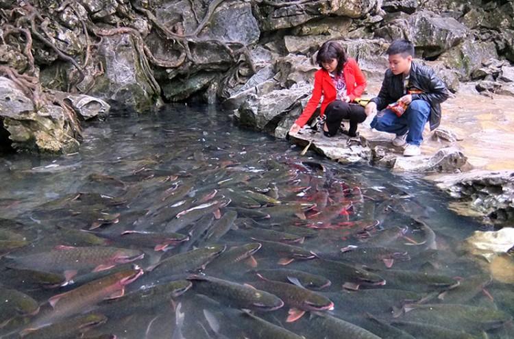 Suối cá Cẩm Lương