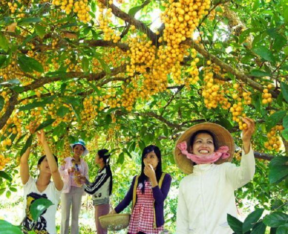 Những khu vườn trái cây miệt vườn